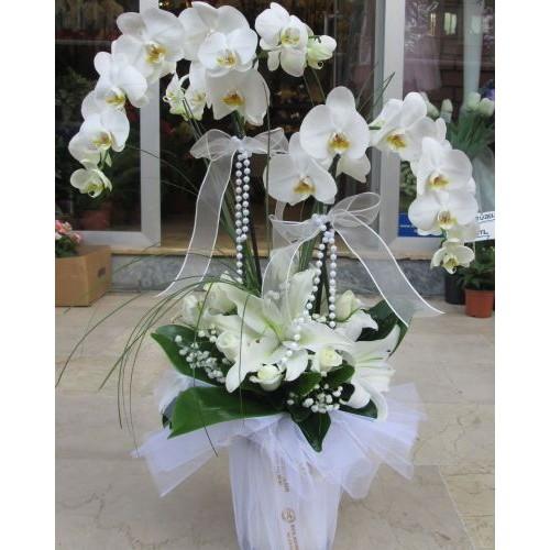 Sivas orkide ve kazablanka