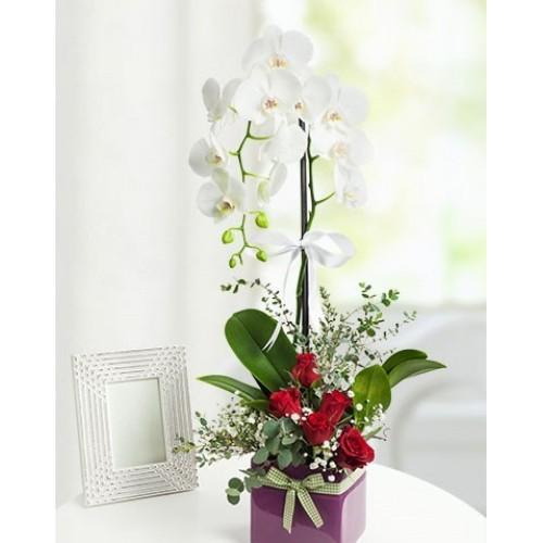 Sivas orkide ve güller